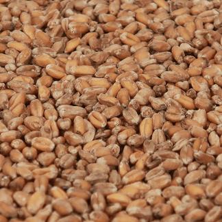 Castle Malting Wheat Blanc malt