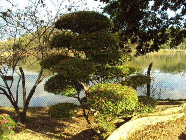 o que fazer no parque ibirapuera pavilhao japones
