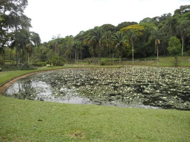 o que fazer no jardim botanico sp lago