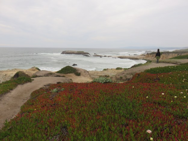 Jardim na praia entre San Francisco e Santa Cruz. Foto: Marcelle Ribeiro