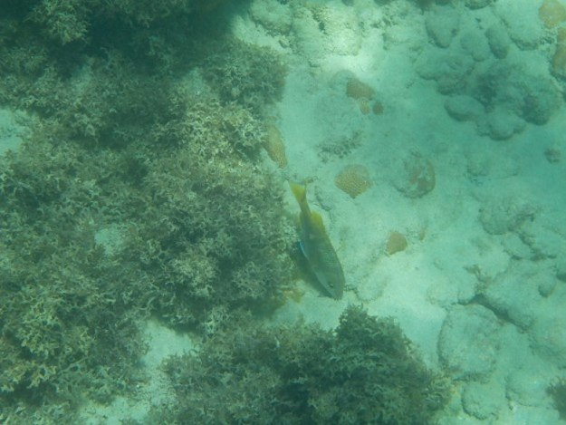 peixinho nas piscinas naturais em maracajaú roteiro rio grande do norte