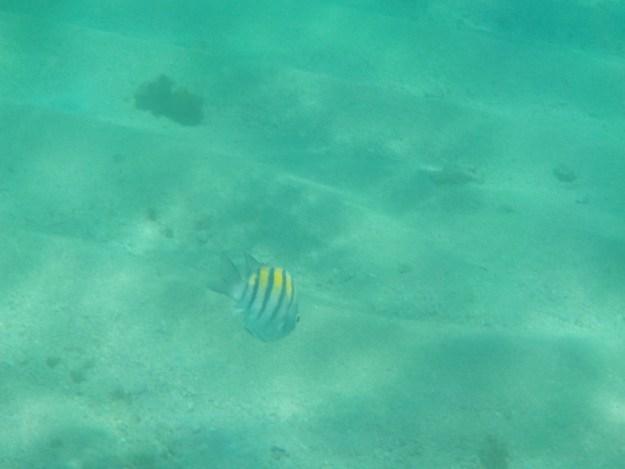 parrachos de maracajau peixe mergulho