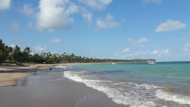 O coqueiral lindo da praia da Laje. Foto: Marcelle Ribeiro