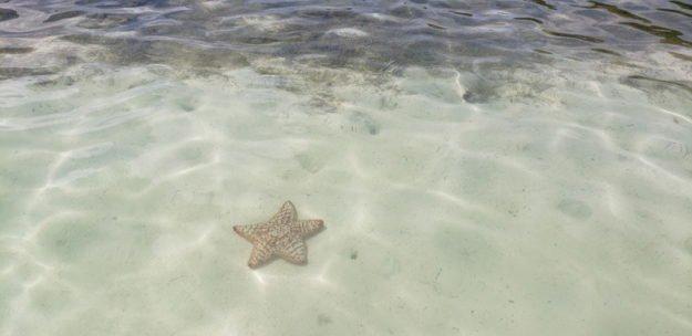 estrela do mar passeio de caiaque san andres