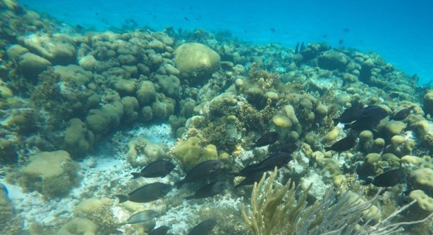 peixes ilha de providencia mar