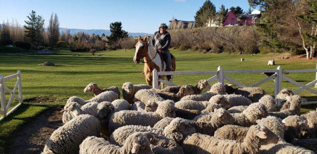 ovelhas estancia 25 de mayo o que fazer em el calafate