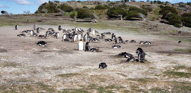 pinguins o que fazer em ushuaia