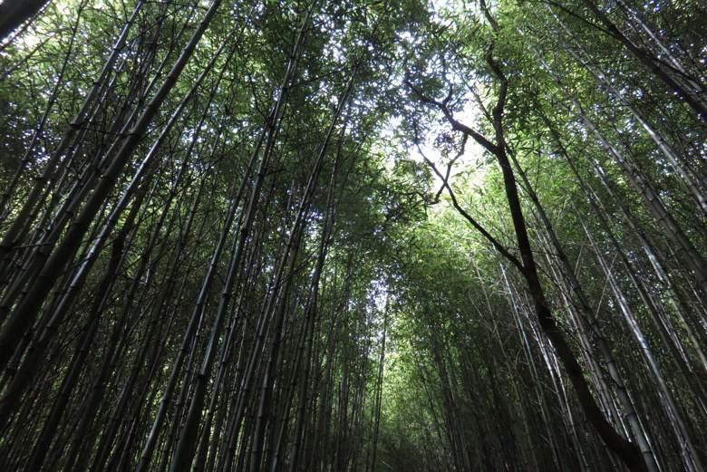o que fazer em petrópolis parque da serra dos órgãos florestas