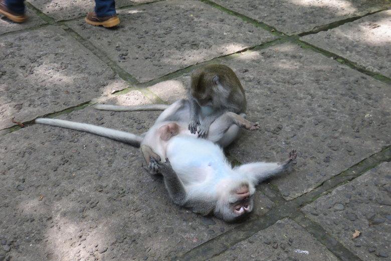 macacos chao seguro viagem ásia