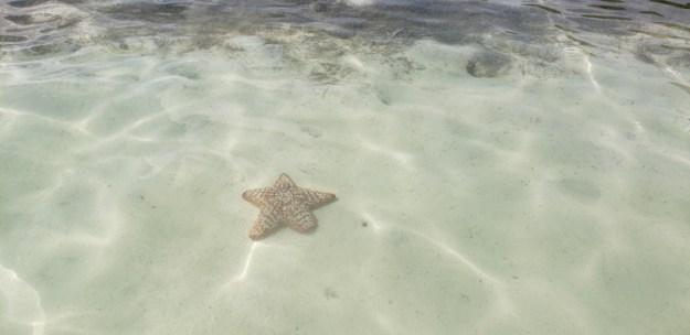 estrela do mar praia turismo responsável