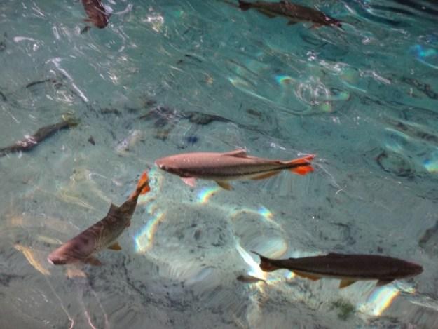 passeios em nobres aquario encantado