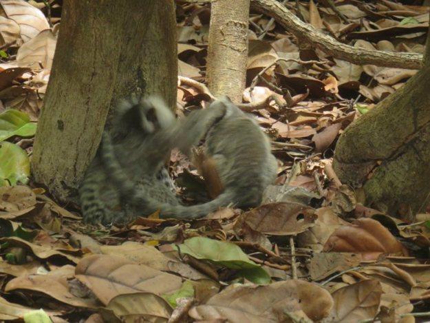 o que fazer em pipa micos santuário ecológico pipa