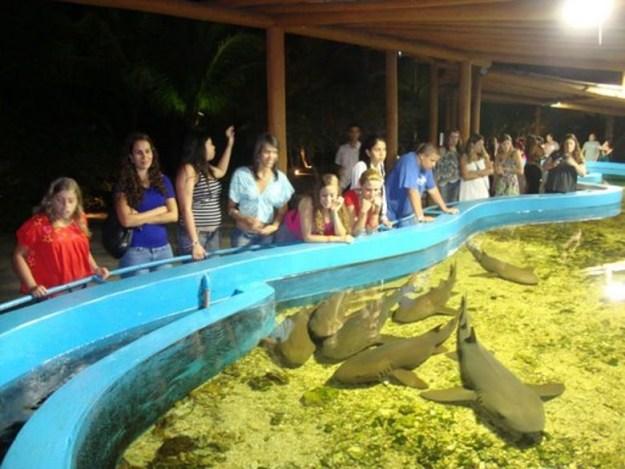 o que fazer em porto seguro ilha dos aquarios