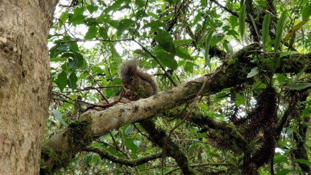 esquilo arvore o que fazer em monte verde