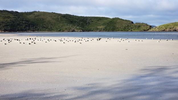 aves ilha do japonês praias de cabo frio