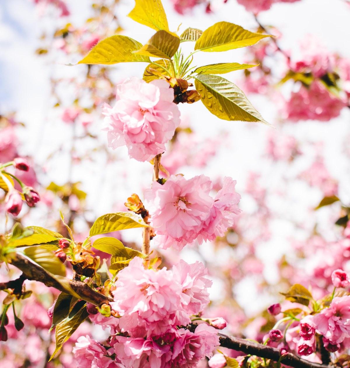 Spring Blooms - www.viciloves.com - @viciloves1