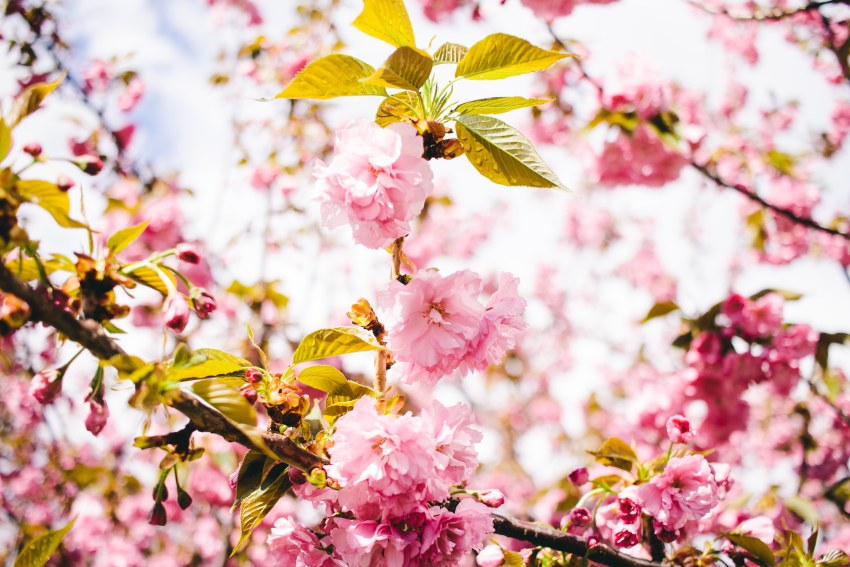 Friday Favorites 9 : Friday favorites vol. 9 preparing for spring viciloves