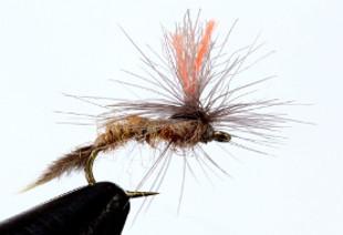 mosca emergente-1
