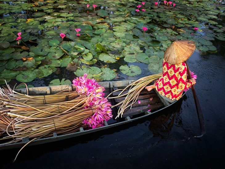 water-lily-harvest_95201_990x742