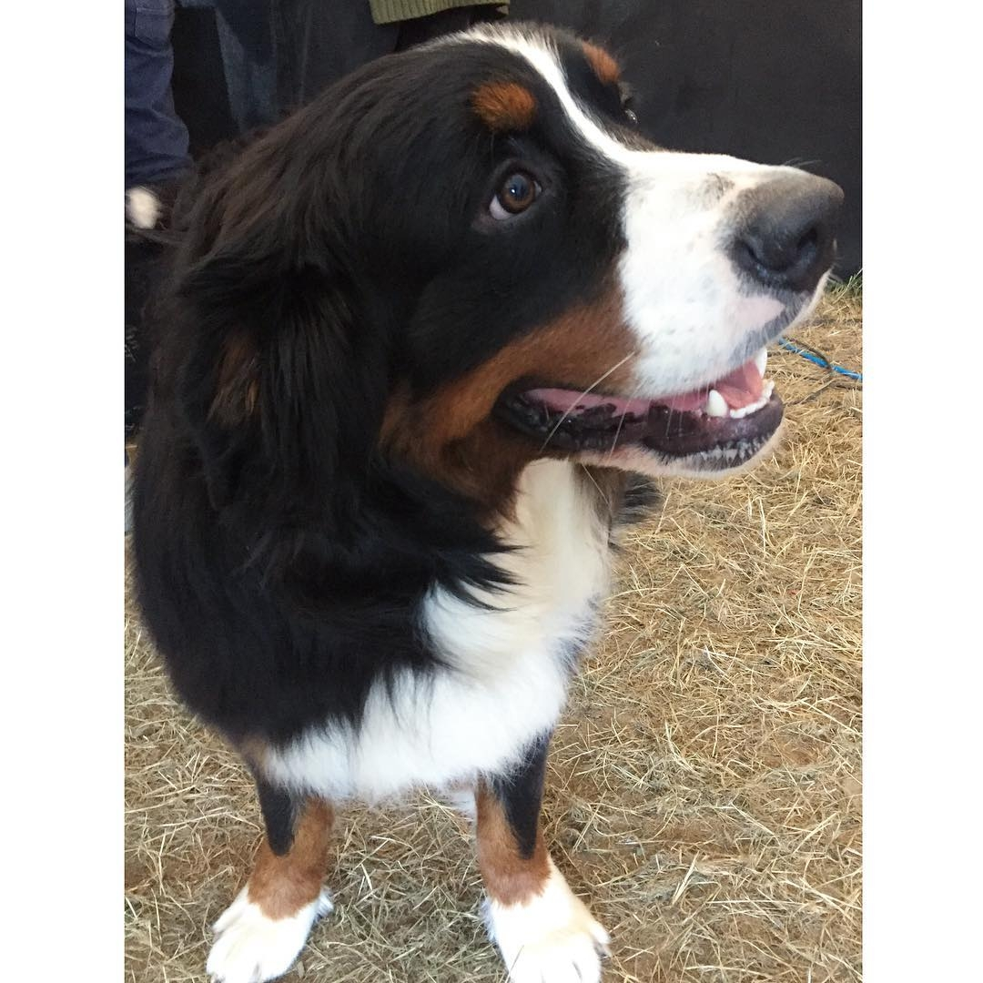 Dogs were allowed leefestuk This here is puppy Rocky athellip
