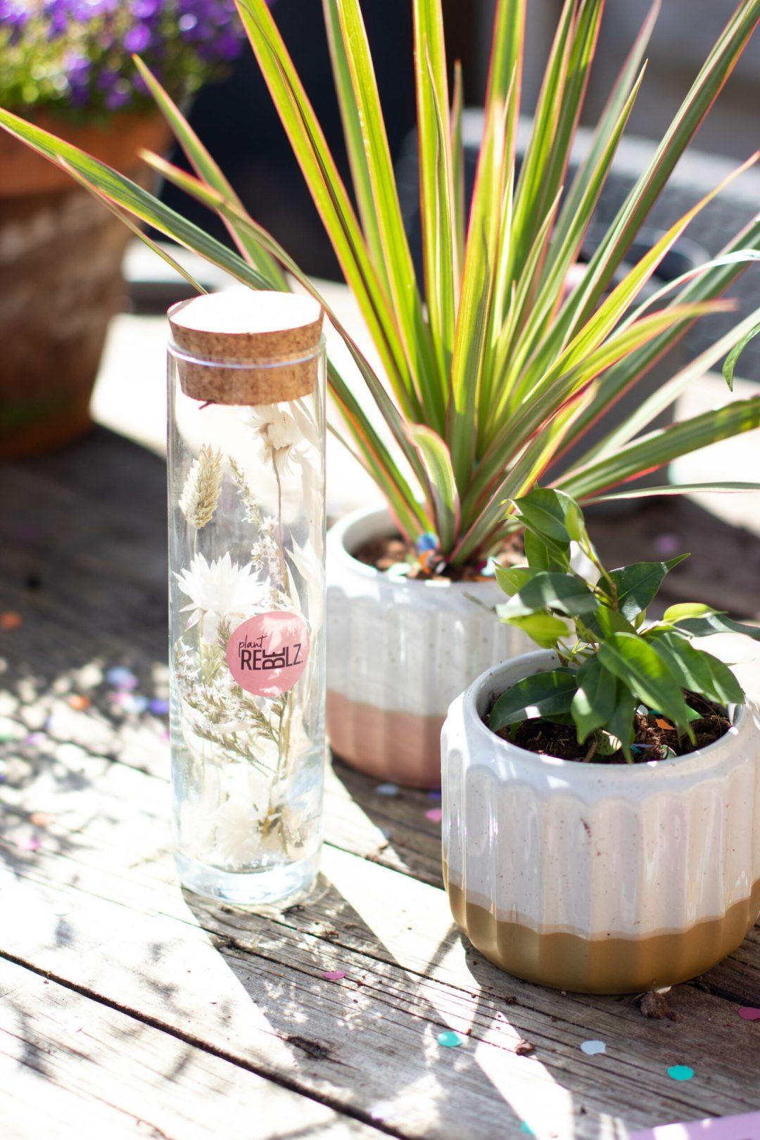 Vier de lente met Plant Rebelz!