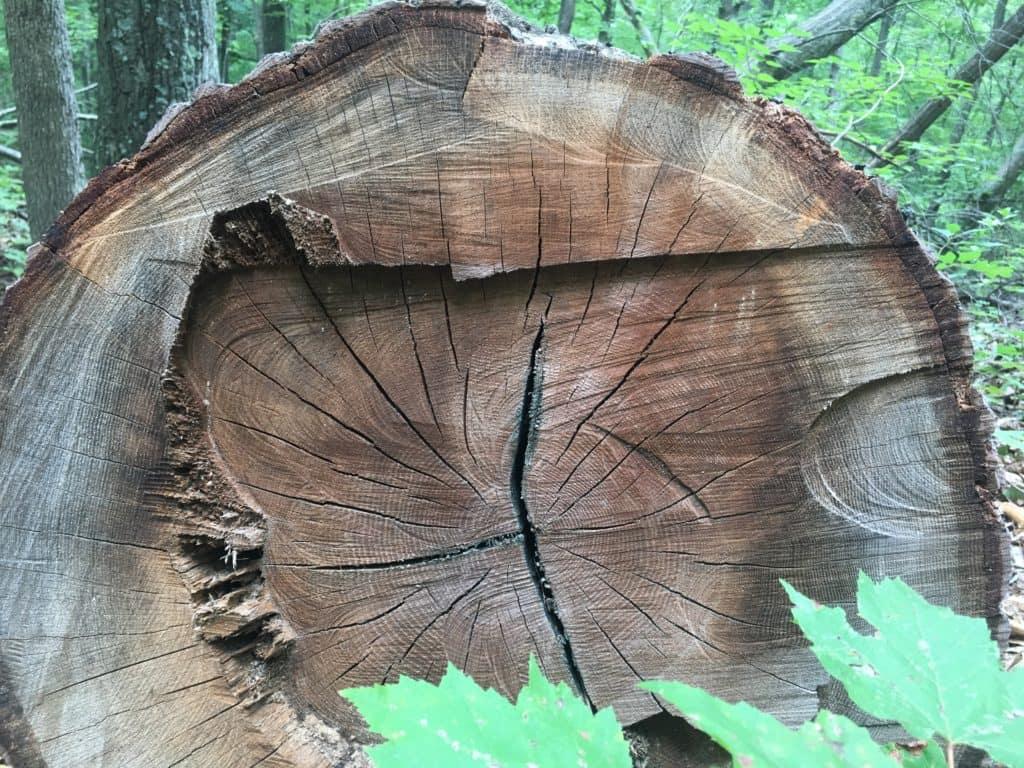 Dead Oak Tree Removal