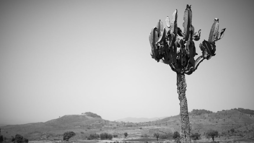 Wild nature of Ethiopia in black and white – part ii