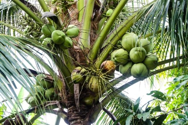 VCT - Fruit Orchard - James Pham-11