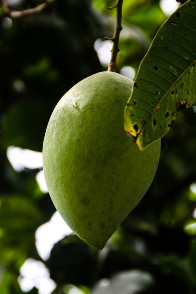 VCT - Fruit Orchard - James Pham-16