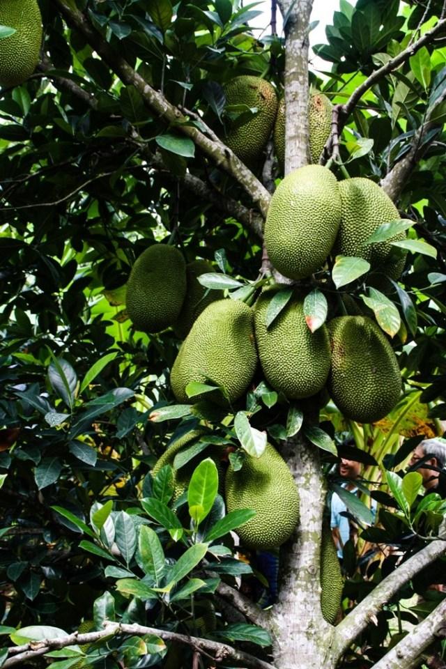 VCT - Fruit Orchard - James Pham-18