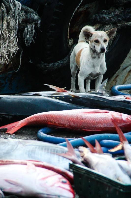 Victoria Phan Thiet - Phan Thiet Fish Market - James Pham-44
