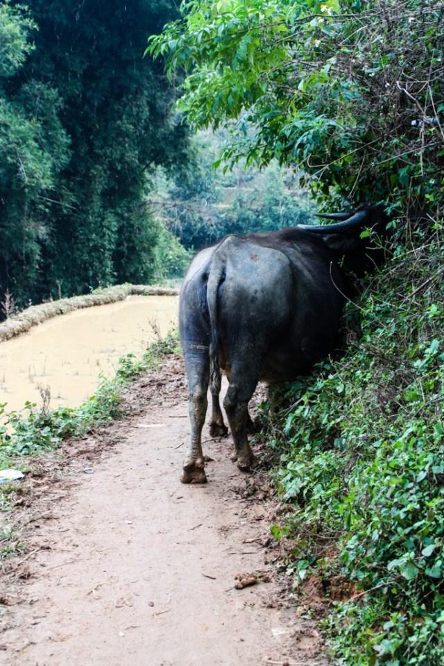 Sapa - Muong Hoa Valley - Image by James Pham-117