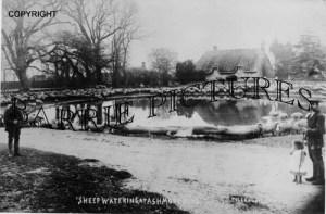 Ashmore, Sheep Watering c1890