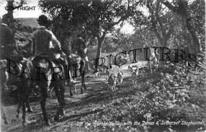 Horner, Devon and Somerset Staghounds 1918
