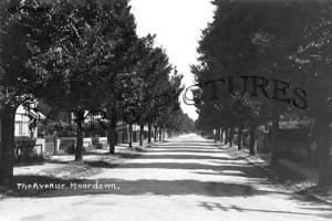 Moordown, The Avenue c1930