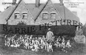 Exford, Staghounds at the Kennels c1905