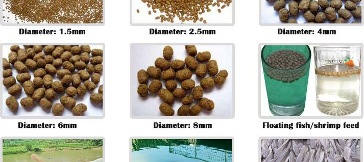 fish feed machine price