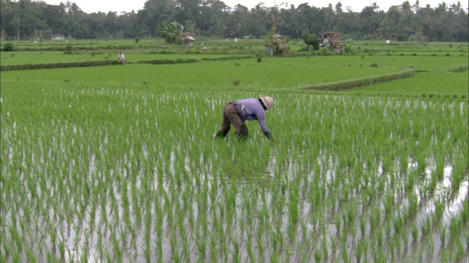 rice economy and policies in Nigeria