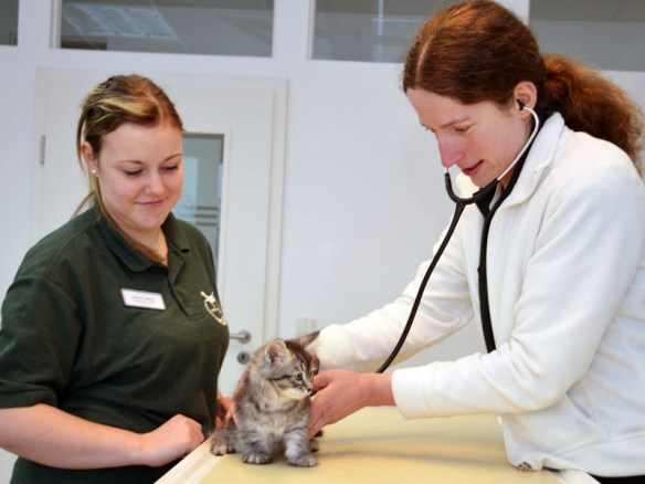 Der erste Tierarztbesuch