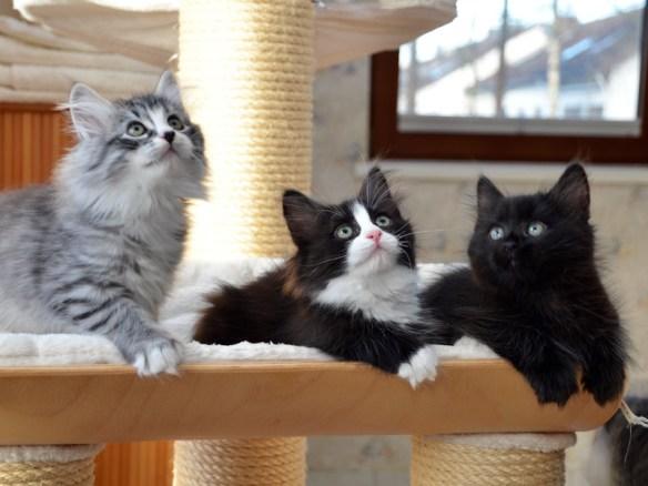 Die drei von der Tankstelle ;-)