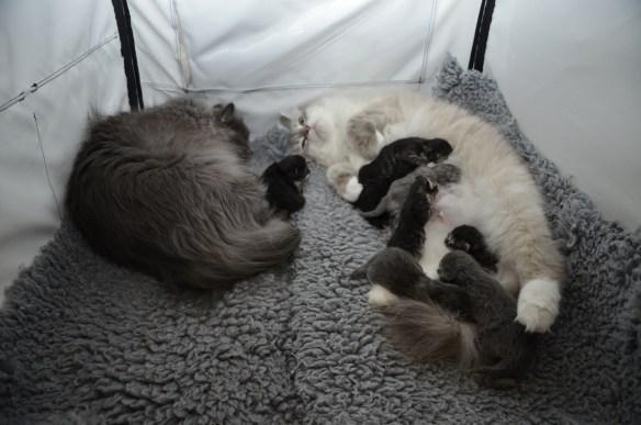 Die Großfamilie im Showshelter, die Mamis sind wieder zufrieden