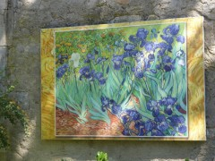 Van Gogh painted irises while in  Arles