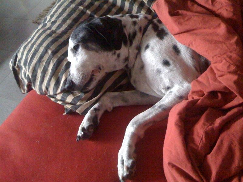 Vida de Perros  Part 4