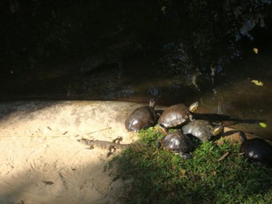 Jabutis e jacarés - Parque das Aves