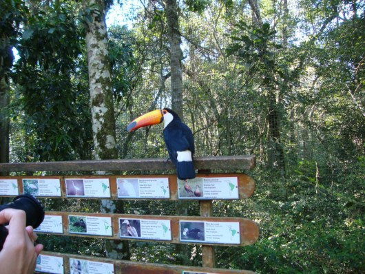 Tucano - Parque das Aves