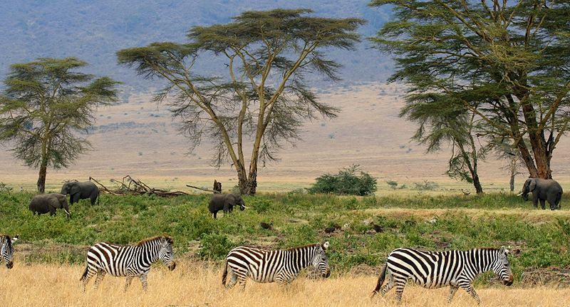 Savana Africana - África