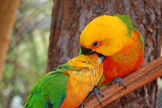 Bird Land - HotPark