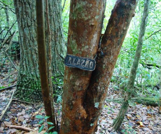 Árvores em Bonito - MS