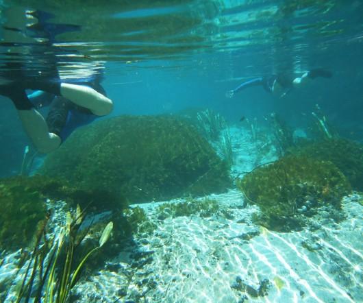 Dentro d'água - Rio Sucuri