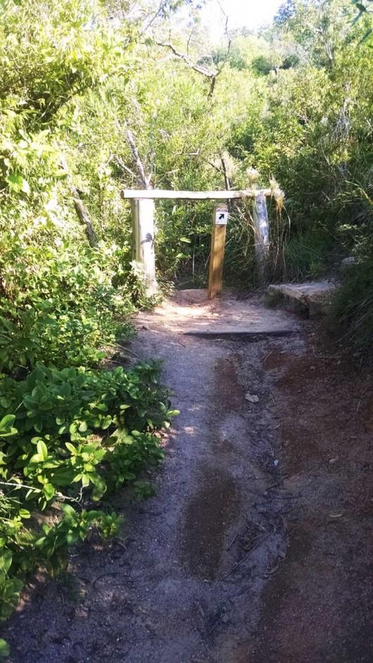 Caminho trilha Morro do Macaco